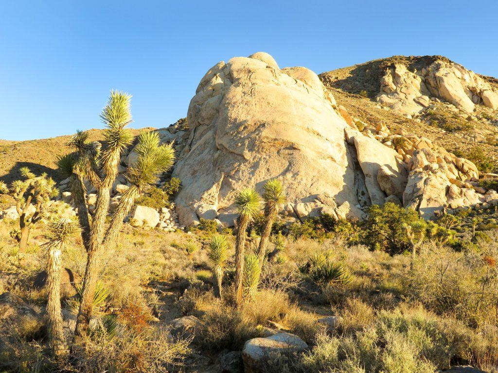 Saddle Rock